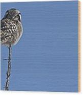 Northern Hawk Owl Wood Print