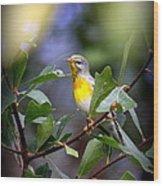 Northern Parula 9308-002 Wood Print