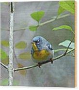 Northern Parula On Branch Wood Print