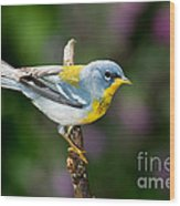 Northern Parula Warbler Wood Print