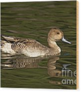 Northern Pintail Molting Wood Print