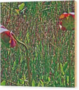 Northern Pitcher Plant In French Mountain Bog On Cape Breton Isl Wood Print