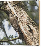 Northern Red Shafted Flicker Wood Print