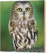 Northern Saw-whet Owl Aegolius Acadicus Wildlife Rescue Wood Print