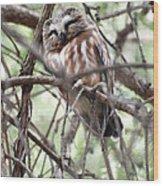 Northern Saw-whet Owl  Wood Print