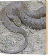 Northern Water Snake Wood Print