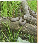 Northern Water Snake - Nerodia Sipedon Wood Print
