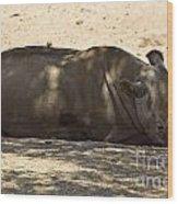 Northern White Rhinoceros - Ceratotherium Simum Cottoni Wood Print