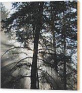 Northwoods Morning Wood Print