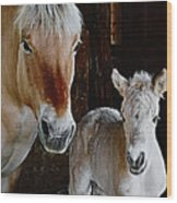 Norwegian Fjord Horse And Colt Digital Art Wood Print