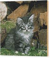Norwegian Forest Kitten Wood Print