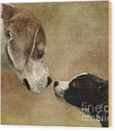 Nose To Nose Dogs Wood Print by Linsey Williams