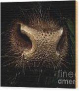 Nosy Wood Print