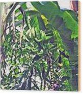 Nosy Komba Banana Palm Wood Print