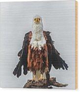 Not So Majestic Eagle Wood Print