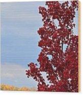 November Red Wood Print