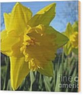 Now That's A Daffodil Wood Print