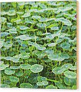 Nuanced Nasturtium Wood Print