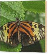 Numata Longwing Butterfly Wood Print