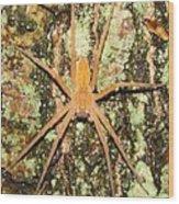 Nursery Web Spider Wood Print