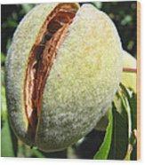 Nut Case Wood Print
