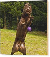 Nute And The Ball Wood Print