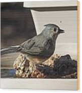 Titmouse Drinking Wood Print