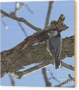 Nuthatch Getting To The Good Stuff Wood Print