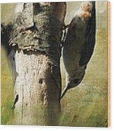 Nuthatch Wood Print