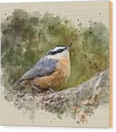 Nuthatch Watercolor Art Wood Print