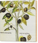 Nutmeg Plant Botanical Wood Print