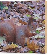 Nuts About Nuts Wood Print
