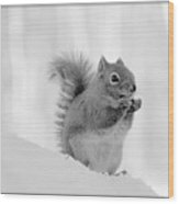 Nuts Over You Wood Print