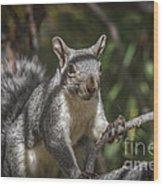 Nuts Please Wood Print