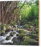 Banyan Nuuanu Stream Wood Print