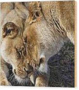 Nuzzling Lions Wood Print
