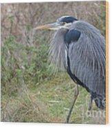 Nw Blue Heron Wood Print