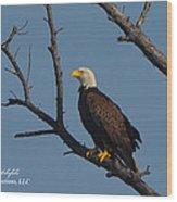 Nw Florida Bald Eagle Iv Wood Print