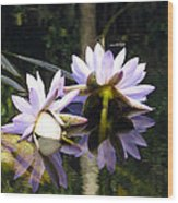 Nymphaea Colorata. Water Lilies Wood Print