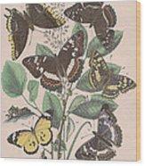 Nymphalidae - Danaidae Wood Print