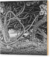 Oahu Ground Vines - Hawaii Wood Print by Daniel Hagerman