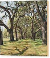 Oak Allee At Roseland Plantation  Wood Print
