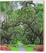 Oak Allee Brookgreen  Wood Print