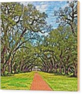 Oak Alley 3 Oil Wood Print