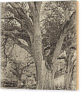 Oak Alley Backyard Seoia Wood Print