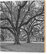 Oak Alley Grounds Bw Wood Print