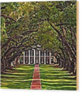 Oak Alley II Wood Print by Steve Harrington
