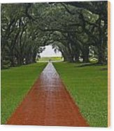 Oak Alley Path Wood Print