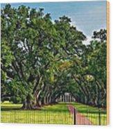Oak Alley Plantation 2 Wood Print