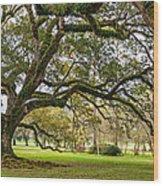 Oak Alley Reverie Wood Print